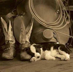 Great picture.  You have to have your herding dog too.