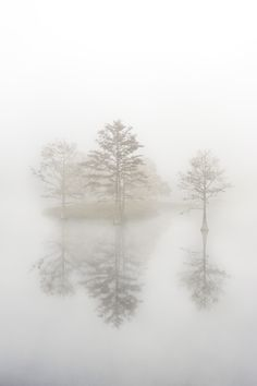 Reflection by Elizabeth Jamison on 500px