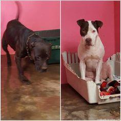 ¡Otro caso de abandono! Rescatan 2 perros que vivían en guindo