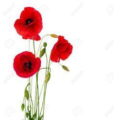 flor poppy EN DIBUJOS - Buscar con Google