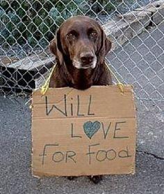 J'ai faim d'amour. / L'animal est une personne.