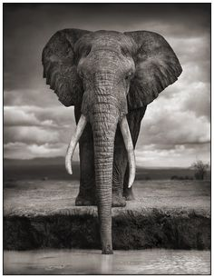 *First The Elephant drank.*   |Africa by Nick Brandt (Part 1) - August 26 2011|~|Nick Brandt is a photographer, artist, lover of beauty. His photographs of Africa and its people make us look at the continent on a whole new way. This is a wonderful, romantic Africa, which is reflected in its people through the famous photographer.|