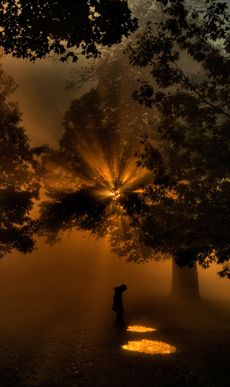 The trees filtering a rising sun through the mist marks a special day.    Photographer: Robert Jones,  Sussex, England