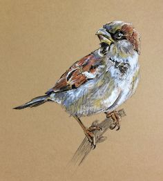Lucy Wilson - Day - Pastel and Ink on card, New Zealand… Chalk Pastel Art, Oil Pastel Art, Chalk Pastels, Dry Pastels, Oil Pastel Drawings, Bird Drawings, Sparrow Drawing, Tiger Art, Bird Art
