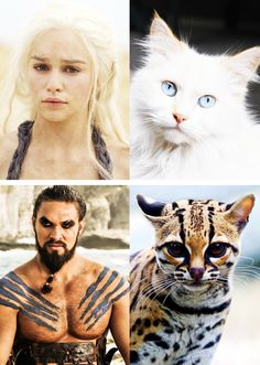 Game of Thrones characters as cats.  #GoT