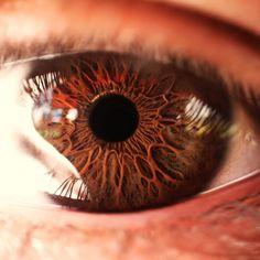 Eye | Iris | Pupil | 目 | œil | глаз | Occhio | Ojo | Color | Texture | Pattern | Macro | Inner Self by dnbly