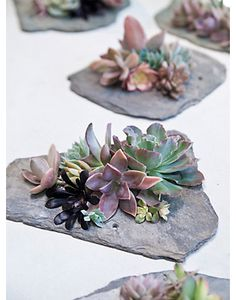 "CENTERPIECE IDEA: Pretty Wedding DIY Centerpiece of Succulents on a Piece of Slate - - get MORE ideas in the PDF ""663 Must-Have Wedding Ideas"" at www.oliverink.etsy.com"