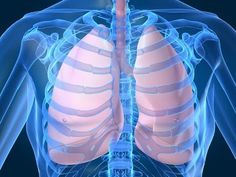 Week 10. Respiratory System for Kids (Breathing) by www.makemegenius.com (+playl...