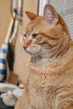 Amarillo gato Cat-like yellow