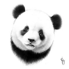 [50] #azyrit #art #drawing #sketch #pencildrawing #pencilsketch #panda
