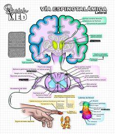 Medicine Notes, Medicine Student, Med School, School Notes, Nervous System Anatomy, Karate, School Organization Notes, Medical Anatomy, Pretty Notes
