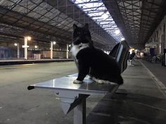 Northern Soul's Alfred Searls interviews a feline celebrity, Felix the Huddersfield Station Cat.