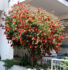 Home And Garden, Flowers, Plants, Gardening, Design, Decor, Tape, Indoor House Plants, Decoration