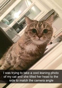 Funny Snapchats Cat Pictures - Tap the link now to see all of our cool cat collections!
