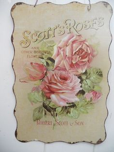 scott's roses - Google Search