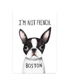 Everything I admire about the Playfull Boston Terrier Puppies I Love Dogs, Puppy Love, Cute Dogs, Boston Terrier Art, Funny Boston Terriers, Boston Terrier Puppies, Boston Terrier Tattoo, Continental Bulldog, Terrier Breeds