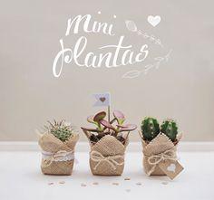 souvenirs cactus suculentas 15 años casamiento cumpleaños