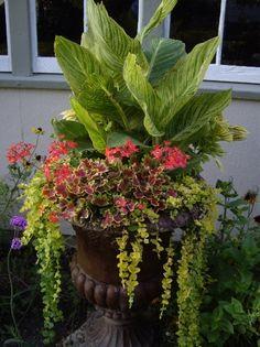 tropical urn