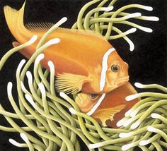 Orange tropical fish on tiles, blends rich colors and modern black background with any contemporary bathroom design or shower tiles. Elizabeth Patterson, Pencil Drawings, Art Drawings, Color Pencil Sketch, Ceramic Tile Art, Tile Murals, Polychromos, Coloured Pencils, Realistic Drawings
