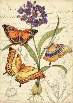 Love Illustration, Botanical Illustration, Decoupage Vintage, Vintage Art, Wall Art Prints, Canvas Prints, Butterfly Drawing, Floral Wall Art, Vintage Flowers