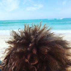 @annierochediaries first beach trip ... #oceanbreeze #poodlesofinstagram #mymomiscool