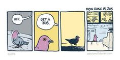 #absurdo #pidgeon