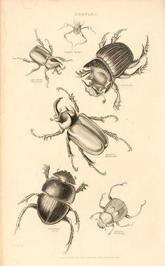 The animal kingdom, - Biodiversity Heritage Library