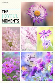 Good morning friends, have a blessed day! Beautiful Front Doors, Beautiful Day, Good Morning Friends, Good Morning Quotes, Have A Blessed Day, Morning Greeting, Shades Of Purple, Joy, In This Moment