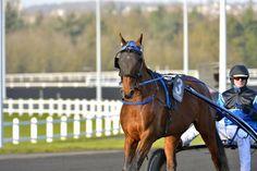 Zoom Vincennes, Prix de France