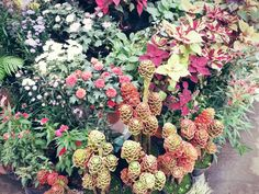 *taken by: me* Beautiful flowers.. #flowers #colorful #pinit