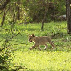 Azura Selous Game Wildlife, In This Moment, Games, Animals, Animales, Animaux, Toys, Animal, Animais