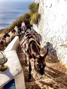 Wayward donkeys running amok in Santorini. (c) GTH & Nathan DePetris