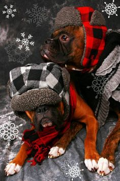 """I really can't stay (Baby, it's cold outside)."" (boxer) by juana Boxer Mom, Boxer And Baby, Baby Dogs, Doggies, Boxer Breed, Boxer Puppies, Boxers, I Love Dogs, Cute Dogs"