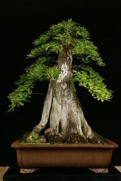 bonsai Like and Repin.  Noelito Flow instagram http://www.instagram.com/noelitoflow