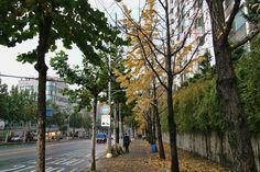 https://flic.kr/p/FNe1TH | 겨울이 다가오는 시간 : Time that winter approaches | 가을의 끝자락은언제나 가을비를 통해서 만나게 됩니다. 처연한 가을분위기가 짙은 색깔을 품으면서 더 강한 인상을 보여주지요.