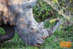 Hungry, hungry Rhino - South Africa — earthXplorer adventure travel photography