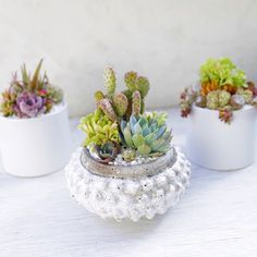 White containers and succulents make for the perfect fun, modern arrangements. Arrangements by Dalla Vita.