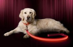 LED Dog Leash - USB Rechargeable - Available in 6 Colors and 2 Sizes - Makes Your Dog Visible, Safe and Seen -- You can get more details by clicking on the image. (This is an affiliate link) Pet Dogs, Dog Cat, Pets, Baby Sleep Positioner, Dog House Bed, Outdoor Dog Bed, Kids Electronics, Up Dog, Dog Rooms
