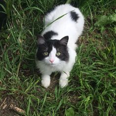 C'est moi Momo le roi des animaux ! #mollypetitcoeur #molly #cat #catstagram #instacat #pets #petstagram #instapet #kitten #kitty #cute #sweet #ilovemycat #love #green #lovely #amazing_eyes #pandacat #meow #miaou #minou #followme #loveme