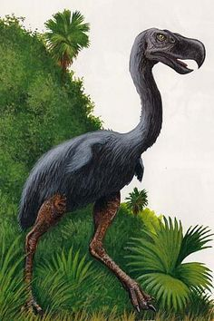 Names+of+Prehistoric+Birds | the prehistoric Terror Bird of South America