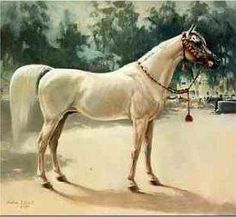 """The exquisite beauty """"Nazeer"""", one of the great stallions!"""