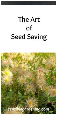 The Art of Seed saving with Sensible Gardening