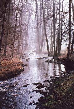 birch & willow: Photo