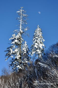 Winter in the Smoky Mountains is such a great time of year to visit!