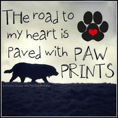Paved paw prints