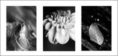 nature triptych Photo & image by Antoinette ᐅ View and rate this photo free at fotocommunity. Discover more images here. More Images, Triptych, Worksheets, Nature Photography, Rooms, Drawings, Photos, Inspiration, Art