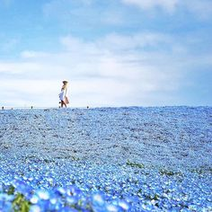 Dame Traveler @life_in_tokyo: A sea of 4.5 million baby blue eye flowers calledNemophiliasin Japan's Ibaraki prefecture. Once you see them, be sure - summer is just around the corner. #dametraveler . . . . . . . . . #flashesofdelight #thatsdarling #theeverygirl #livecolorfully #huntgram #huntgramcolor #howihue #lovelysquares #makeyousmilestyle #popyacolour #oneofthebunch  #thecreatorclass #folkcreative #lifeofadventure #liveauthentic #letsgosomewhere #stayandwonder