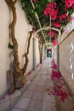 Bougainvillea Walkway, Capri, Italy