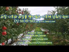 [2017/2월 대구모임] 과일 나무와 과일을 맺지않는 나무에 감춰진 의미 (신 20:19-20) by 뉴저지 Jesus Lover