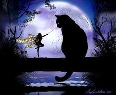 Fais un vœux le chat!